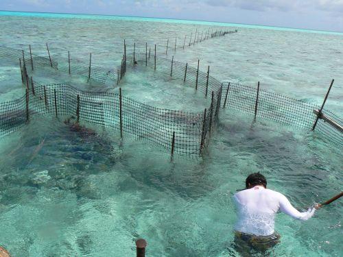 Spedizione scientifica malacologica riserva biosfera di for Allevamento pesci